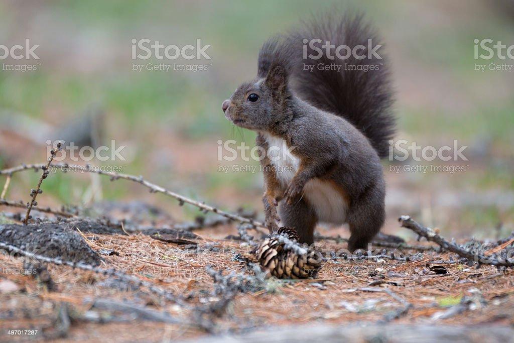 Mammal royalty-free stock photo