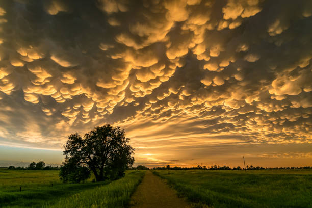 mammatus clouds at the back of a severe thunderstorm over northern nebraska - great plains stock photos and pictures