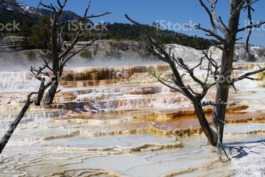 Mammoth Hotsprings Area foto stock royalty-free