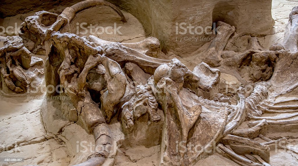 Mammoth Site stock photo