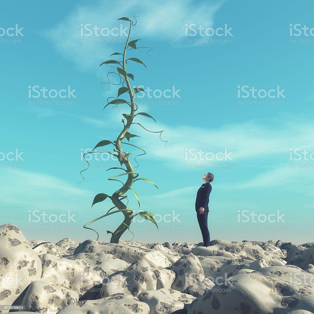 Man admiring a big beanstalk. stock photo