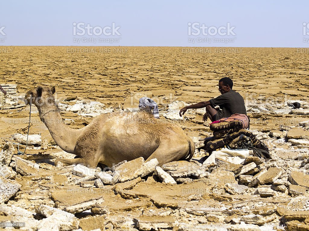 man and camel stock photo