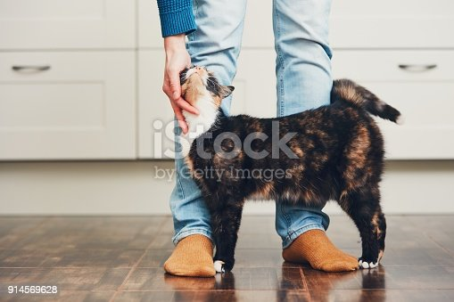 istock Man and cute cat 914569628