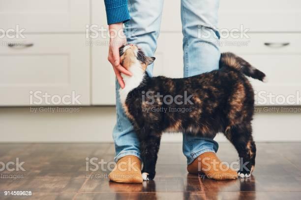 Man and cute cat picture id914569628?b=1&k=6&m=914569628&s=612x612&h=umju8p lhzw520p4dgj2xa0 bad0ghvefecz3h9amby=