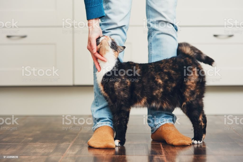 Man and cute cat stock photo