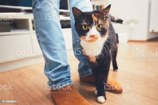 Man and cute cat picture id914569644?b=1&k=6&m=914569644&s=612x612&h=7wcwele5q25nlqavag mgatvk2onfddppvryv3tktwo=
