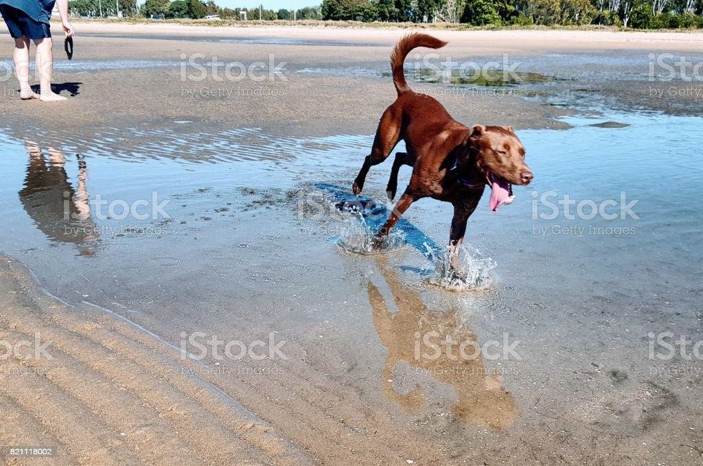 Man and dog at beach. stock photo