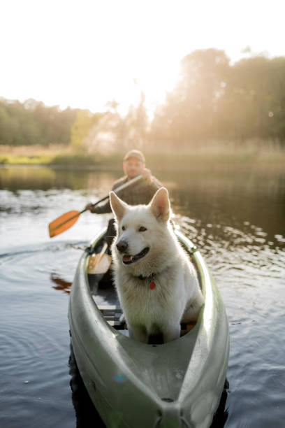 Man and dog canoeing in sunset stock photo