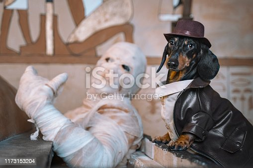 Dog with a man dressed as a mummy sits shrouded in bandages at a celebration of Halloween