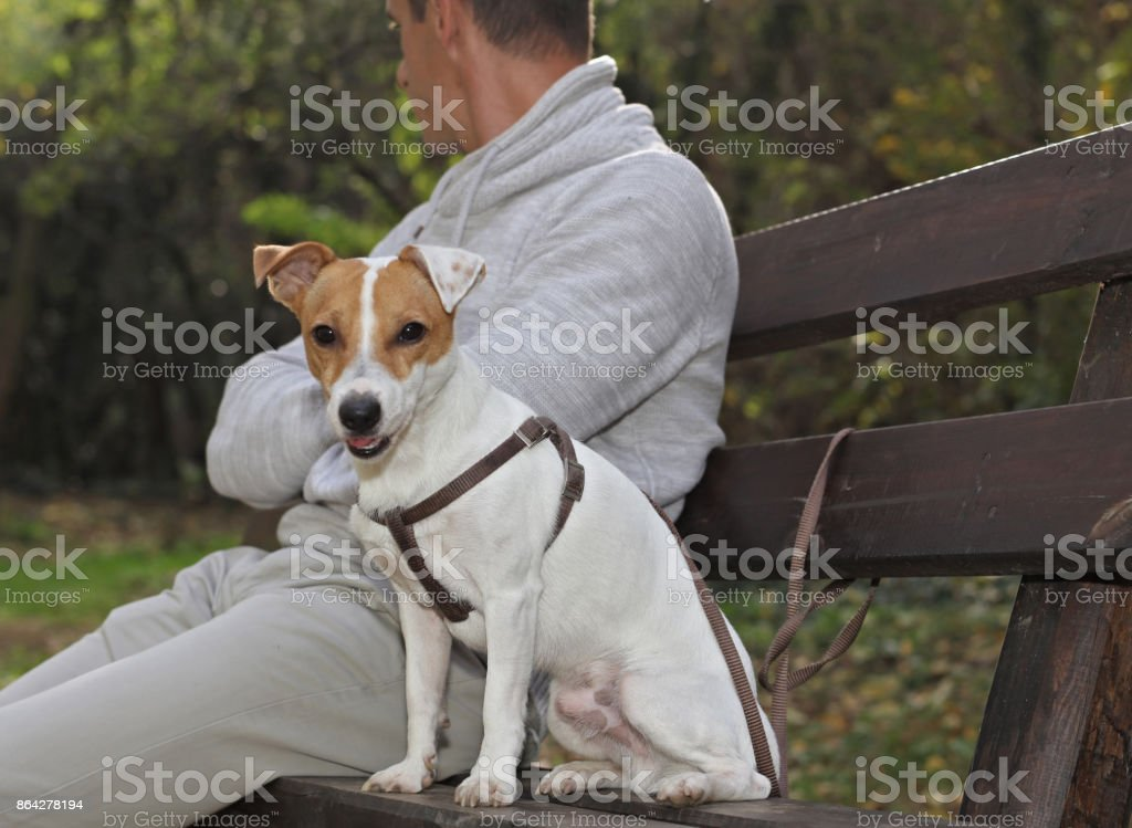 Man and dog in quarrel. royalty-free stock photo