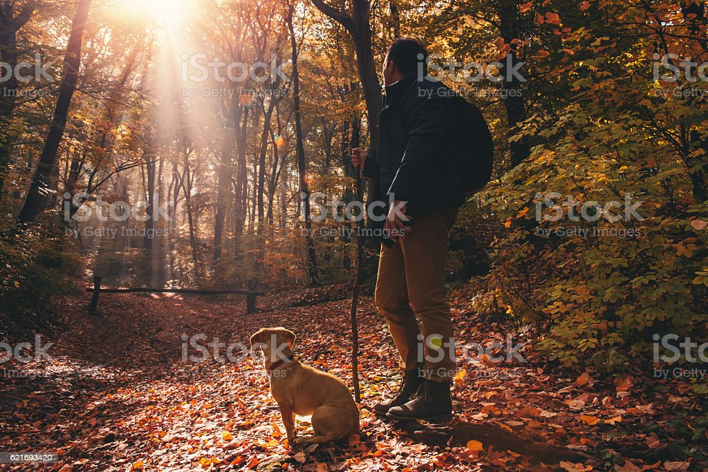 Man and dog in the forest stock photo