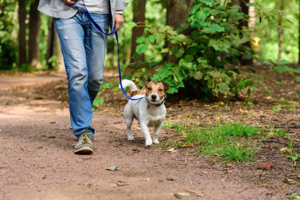 människa och hund på löst koppel vandring på forest av gångstig - hund skog bildbanksfoton och bilder
