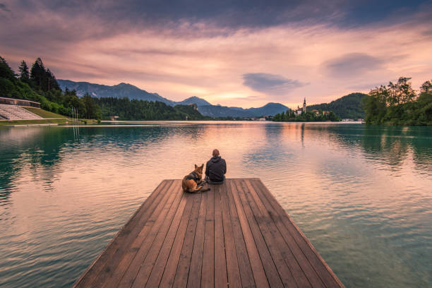 man and dog sitting on wooden deck at bled lake, slovenia - pier stock photos and pictures