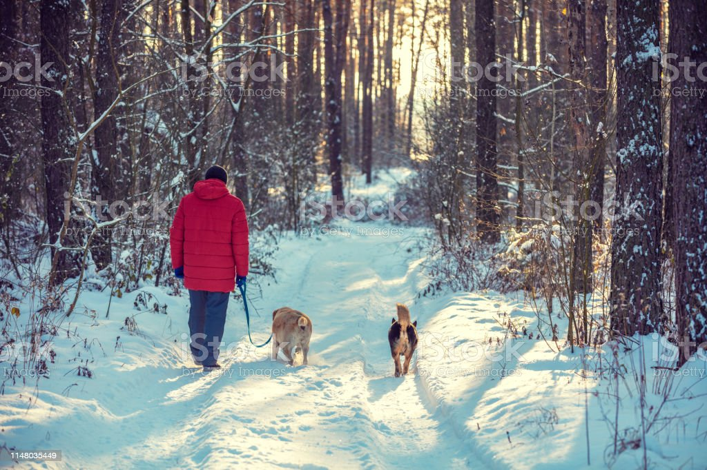A man and dogs are best friends. The man with two dogs walking in the...