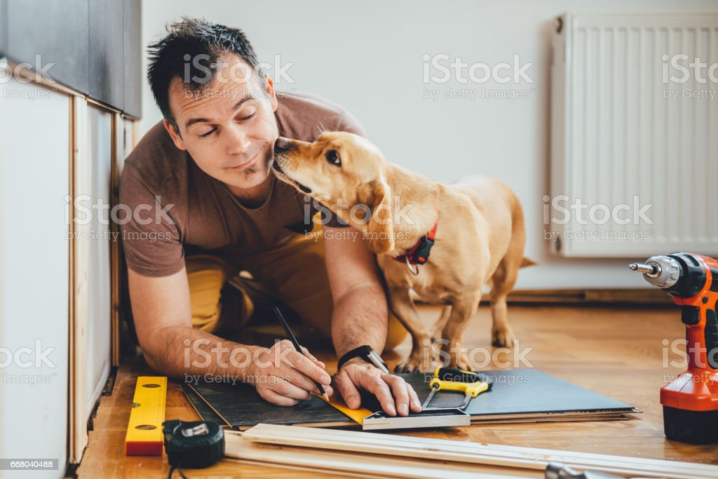 Man and his dog doing renovation work at home stock photo