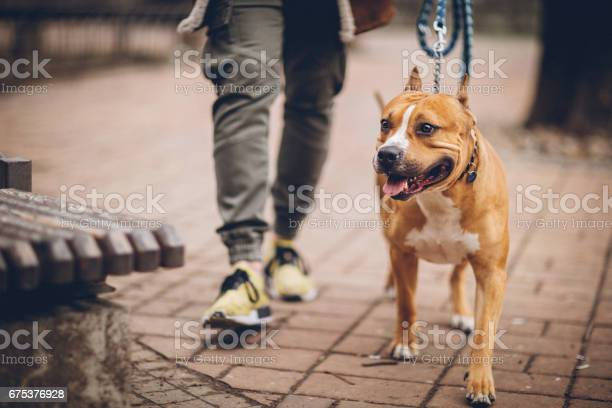 Man and his dog in their daily routine picture id675376928?b=1&k=6&m=675376928&s=612x612&h=mn kjrao1a7dfos3fnnivqpyowgu7zsla72lm cibxu=