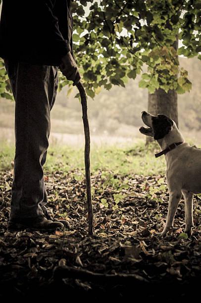 mann und sein hund suchen trüffel - pilze bestimmen stock-fotos und bilder