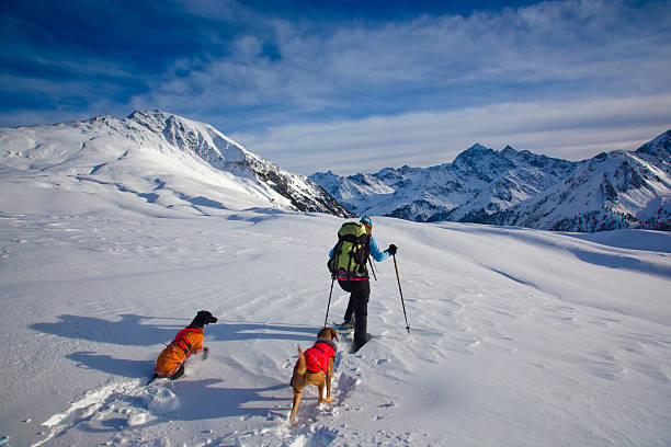 A man and his dogs snowshoeing on a mountain stock photo