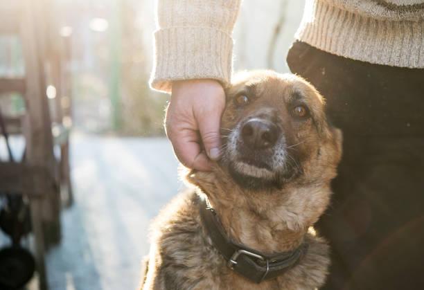 mann und sein schäferhund-hund - hunde aus dem tierheim stock-fotos und bilder