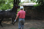 take care about horse and training horses