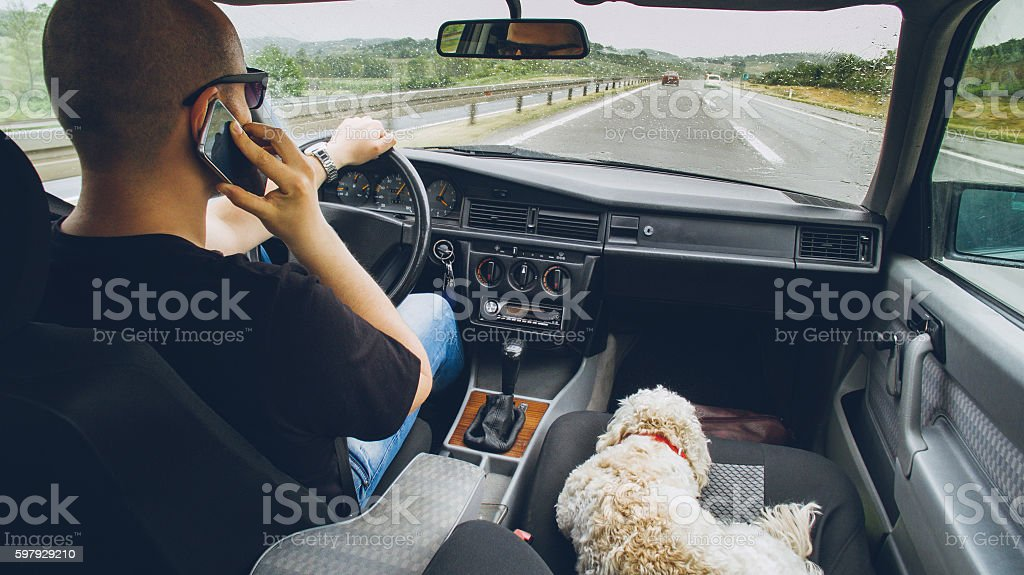 Man and his little white dog traveling by car stock photo