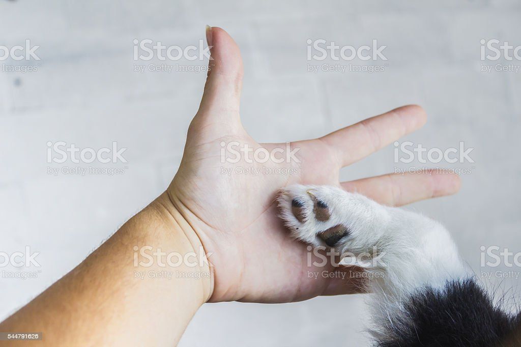 Man and puppy shaking hand and paw stock photo