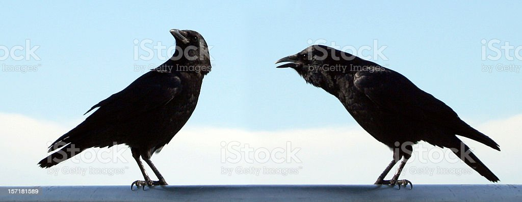Man and Wife Bird? stock photo