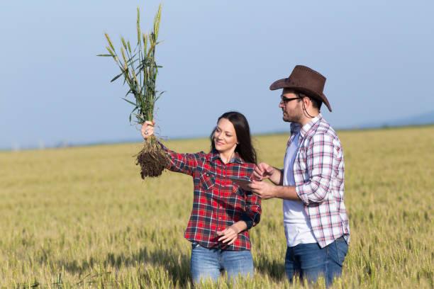 Mann und Frau Landwirt überprüfen Erntequalität im Sommer – Foto