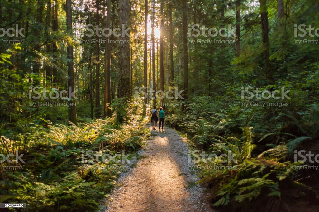 Man and Woman Hikers Admiring Sunbeams Streaming Through Trees stock photo