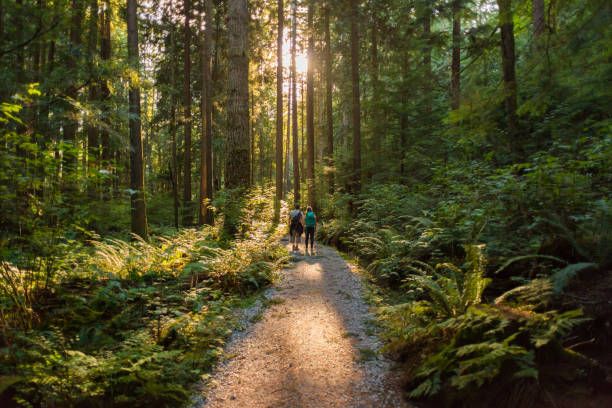 Man and Woman Hikers Admiring Sunbeams Streaming Through Trees Mature father and teenaged daughter hiking through forest on Mt. Seymour Provincial Park, North Vancouver, British Columbia, Canada   forest stock pictures, royalty-free photos & images
