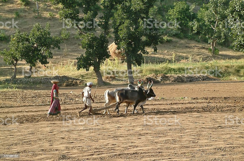 Man and woman plowing and sowing in field, Rajasthan,India royalty-free stock photo
