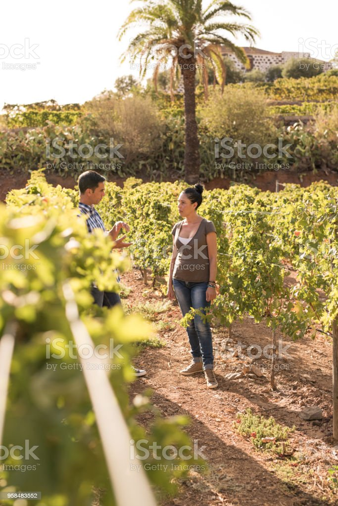 A man and woman standing in the vineyards stock photo