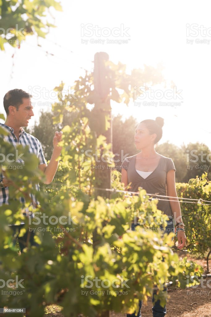 A man and women drinking wine in the winelands stock photo