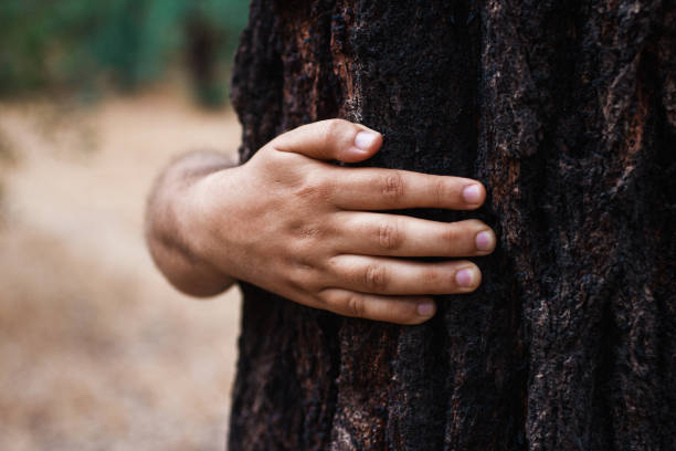 man arm hugging a tree: love or nature protection concept stock photo
