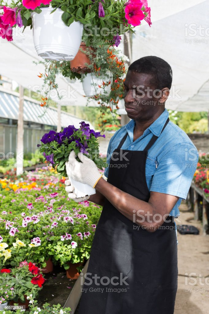Man arranging flowers in glasshouse - Royalty-free Activity Stock Photo