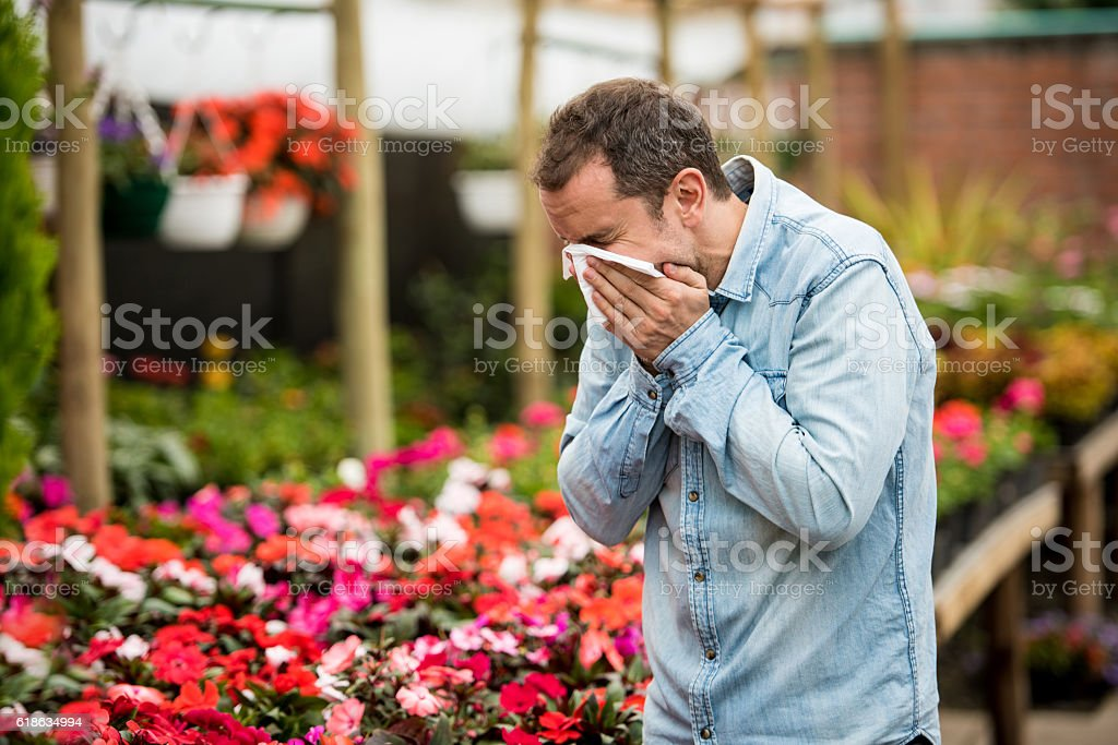 Man at a greenhouse suffering from hay fever stock photo