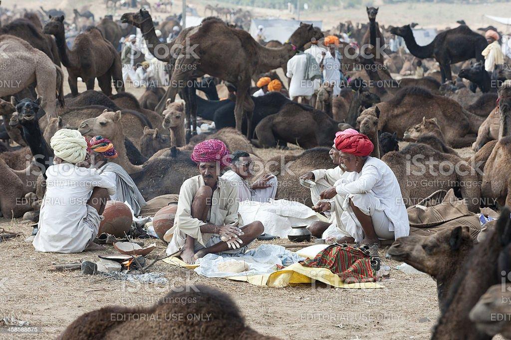 Man at Pushkar Fair prepares chapatis surrounded by camels stock photo