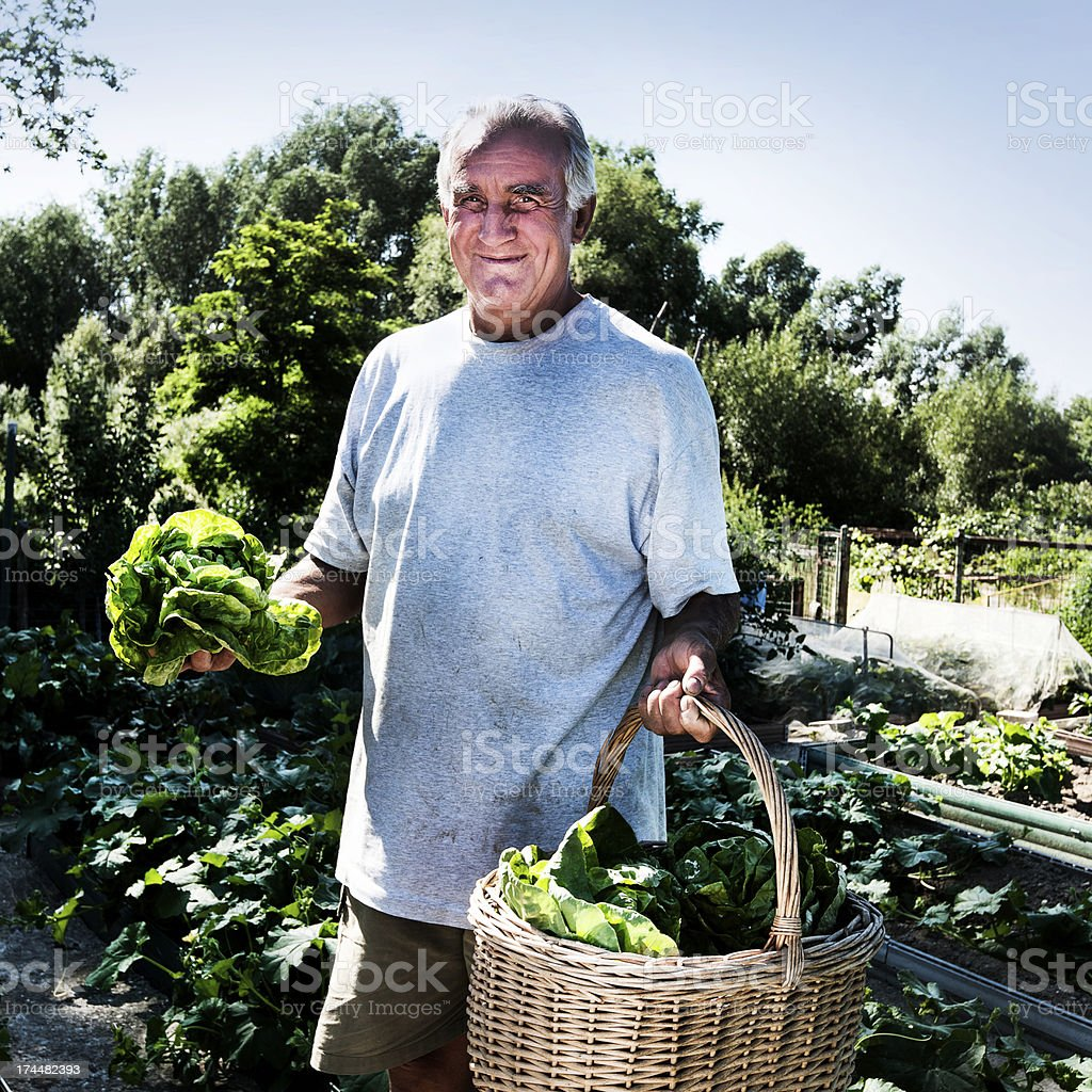 Man at Urban vegetable garden royalty-free stock photo