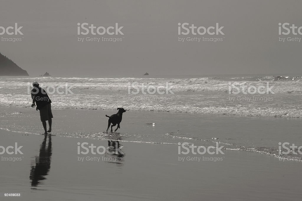 man beach lab dog royalty-free stock photo