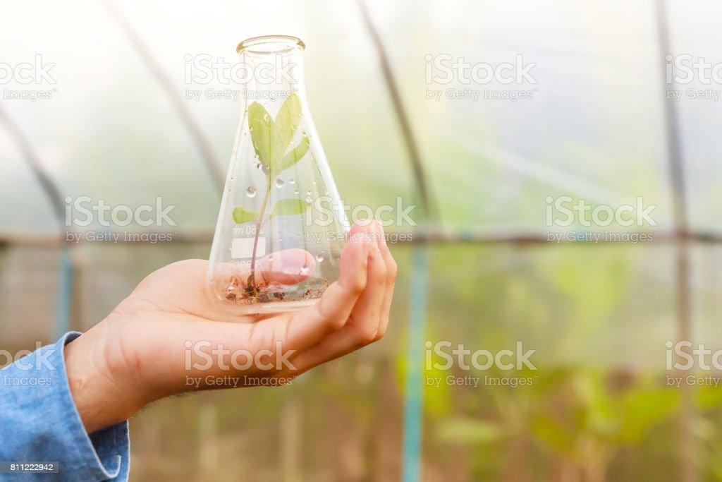 Biologiste d'homme couler le liquide du tube à essai à effet de serre. Concept de l'agriculture. - Photo