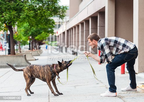 A man plays a game of tug of war with his rescue dog during a walk.