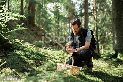 A man picking wild edible mushrooms in the forest. He is kneeling, brushing off the dirt from som chanterelles.