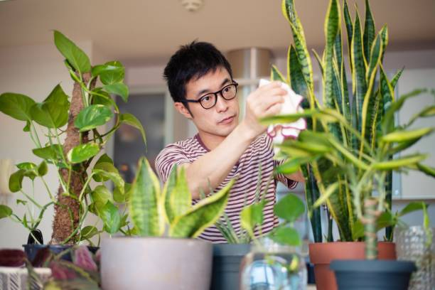 Man caring for his indoor plants stock photo