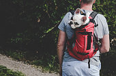 Man carrying his Frenchie puppy in a backpack