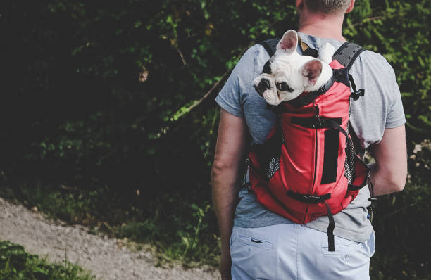 Man carrying dog in backpack pet carrier on a hiking trip Man carrying his Frenchie puppy in a backpack carrying stock pictures, royalty-free photos & images