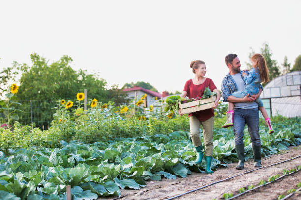 Man carrying his daughter while wife is carrying organic vegetables in crate at greenhouse stock photo
