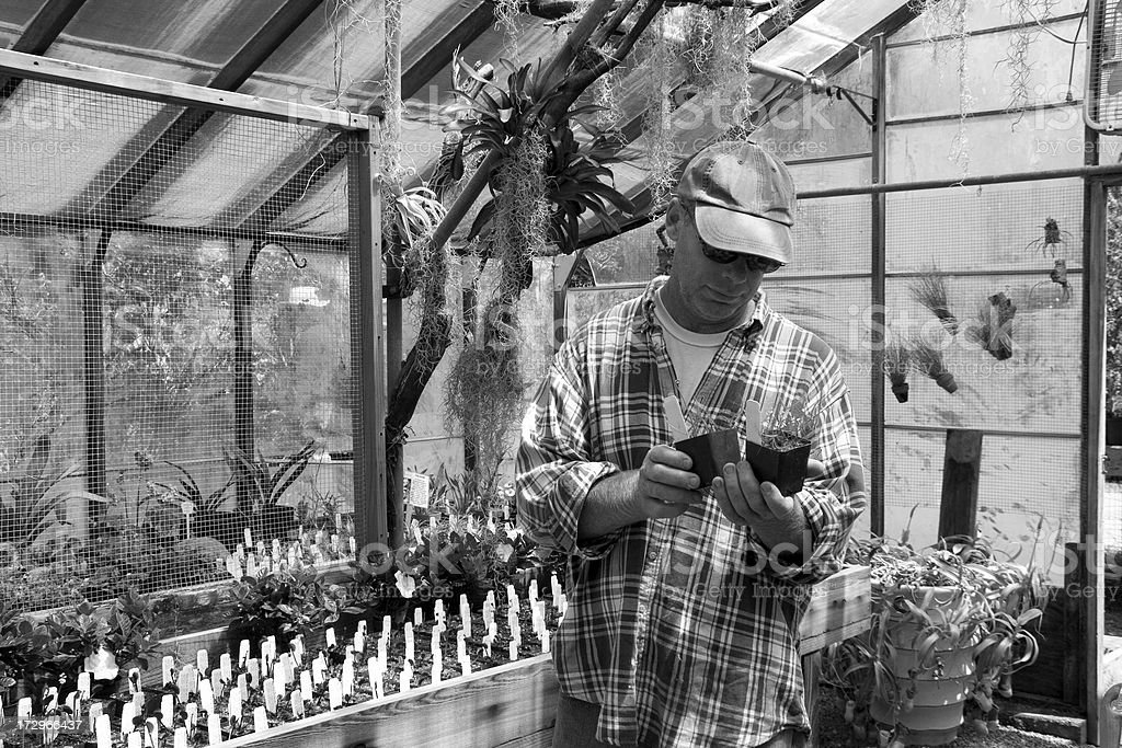 Man Choosing royalty-free stock photo