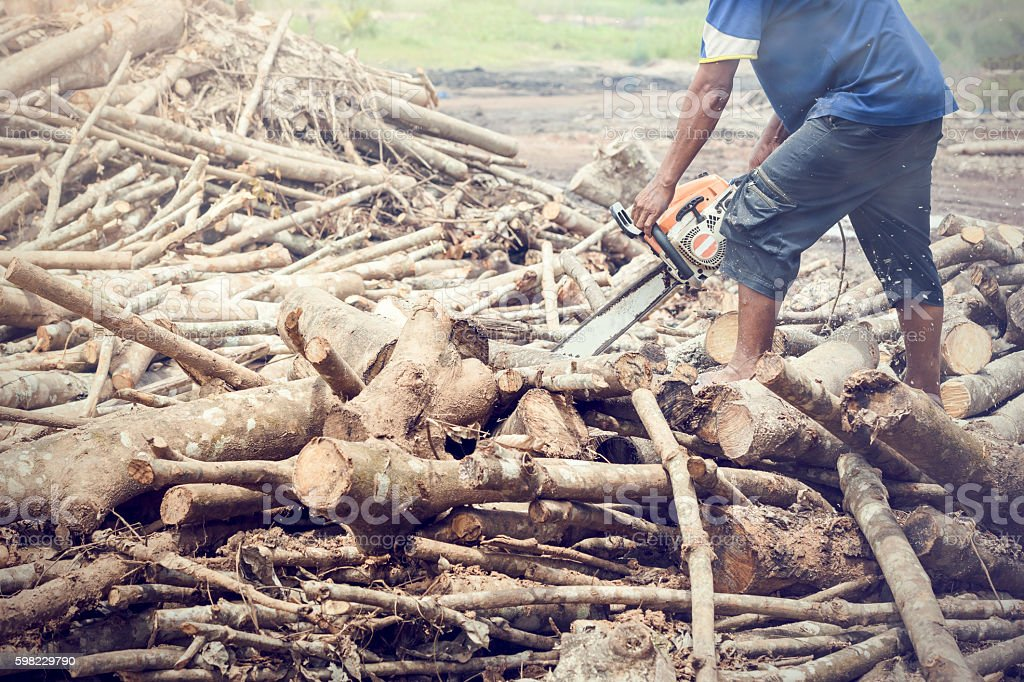 Man chopping wood using a chainsaw. foto royalty-free