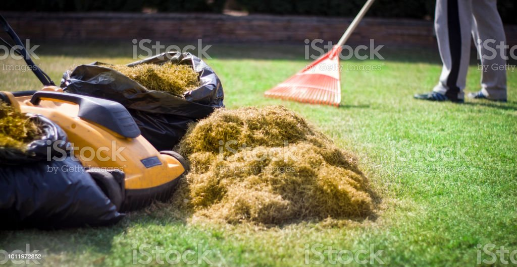 A man clogs the felt with a lawn with red plastic rags, after aeration stock photo