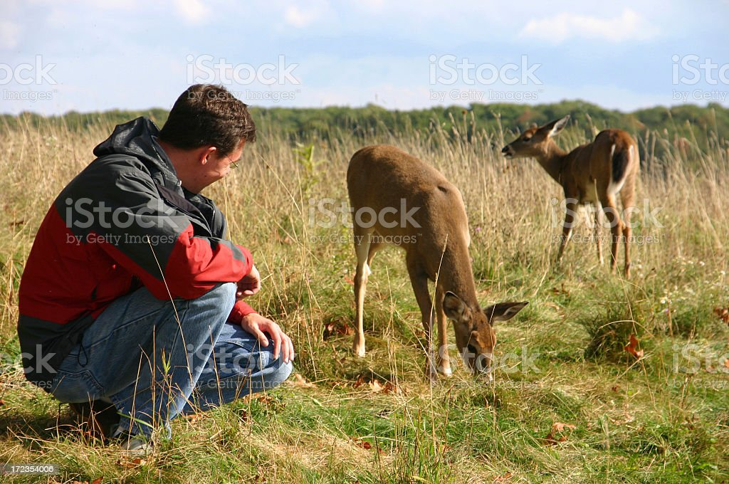 Man close to the deers in Shenandoah National Park, USA royalty-free stock photo